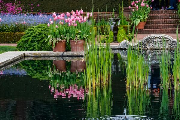 Filoli Gardens  04-08-15