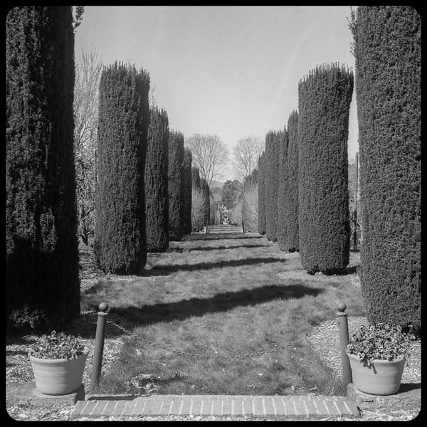 Avenue of Trees - Filoll