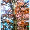 2011-11-28_12-05-00_630_edit0