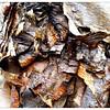 2011-12-05_12-25-12_608_edit0