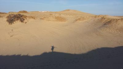 Dunes of PTown