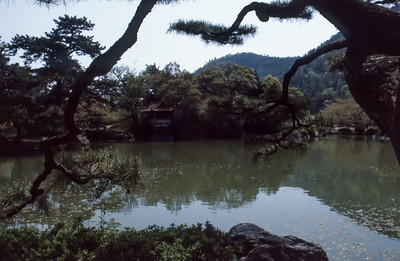 A trip to Japan in April 1984