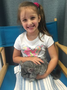 Bay Elem Chinchilla