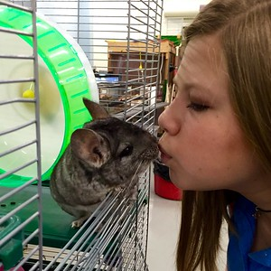 LMC student and chinchilla