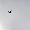 birding-festival-2012-05