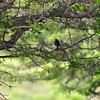 birding-festival-2012-39
