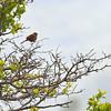 birding-festival-2012-07