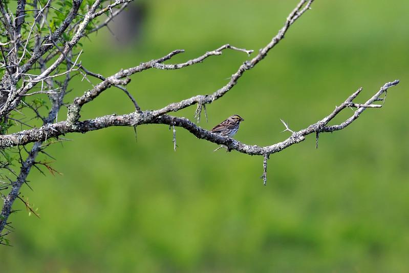 birding-festival-2012-21