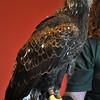 birding-festival-2012-112
