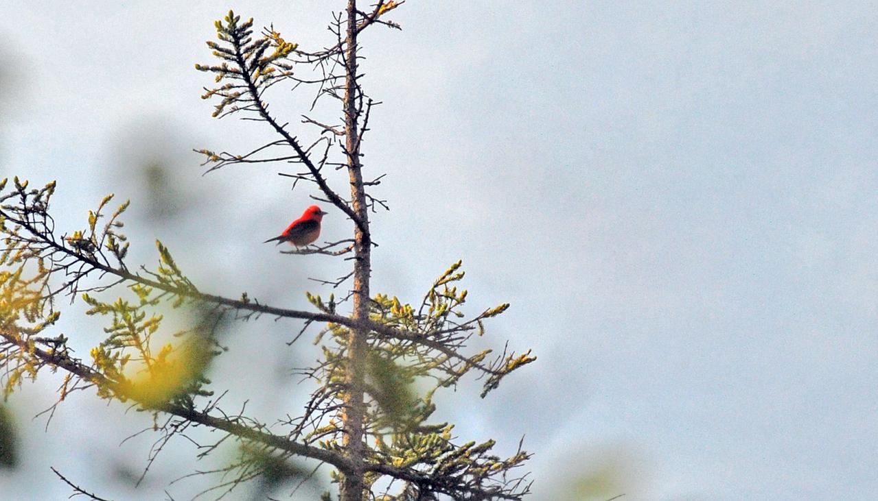birding-festival-2012-060