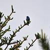 birding-festival-2012-059