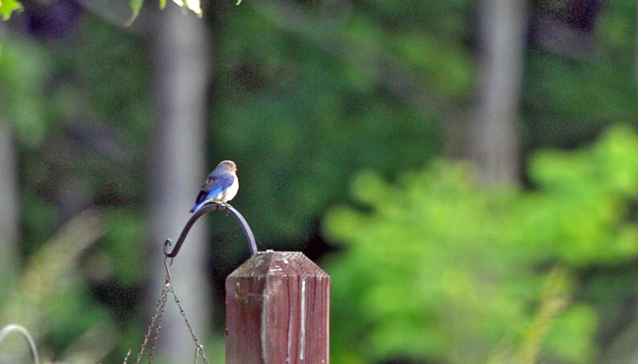 birding-festival-2012-056