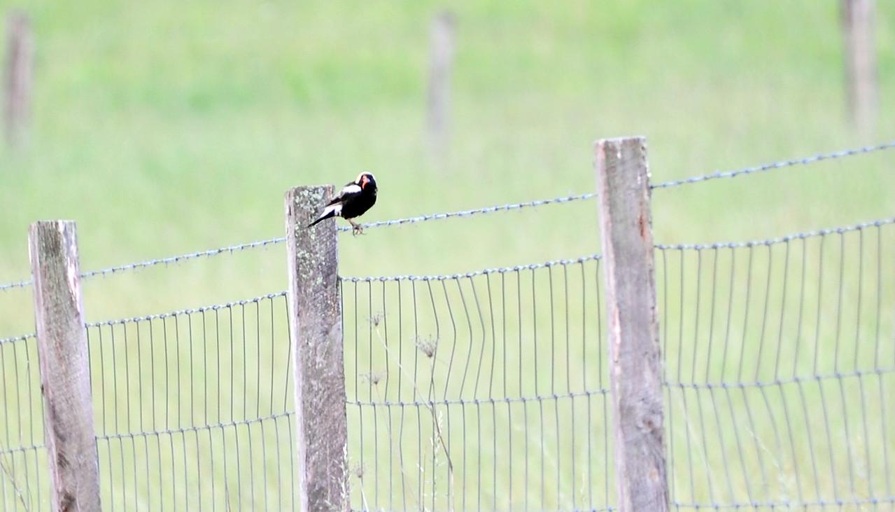 birding-festival-2012-051