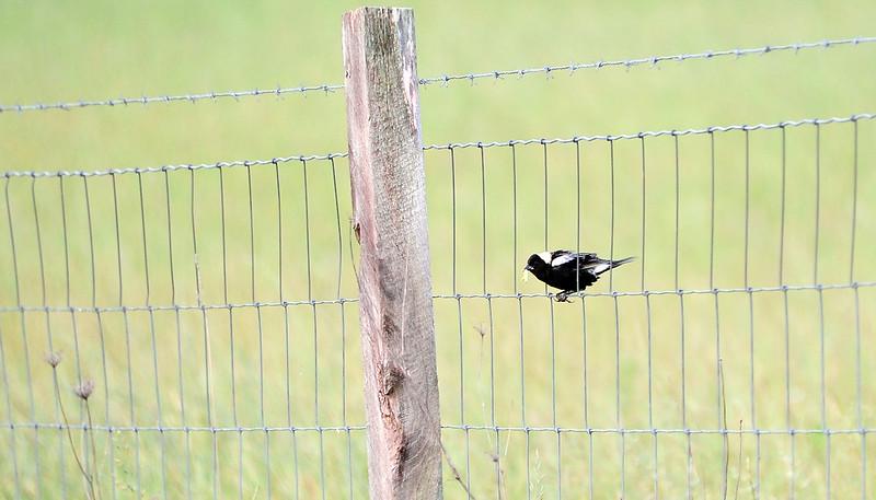 birding-festival-2012-053