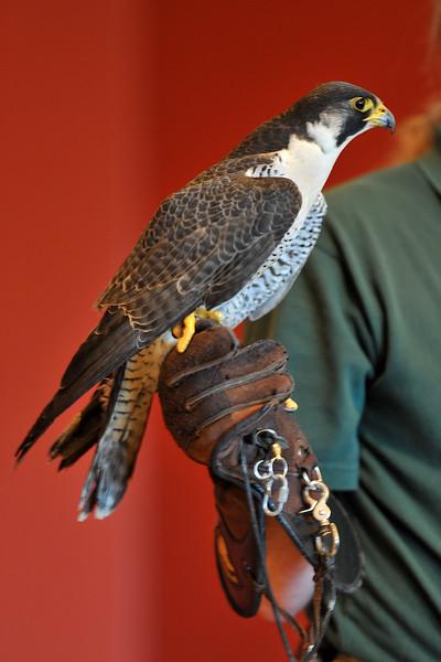 birding-festival-2012-092
