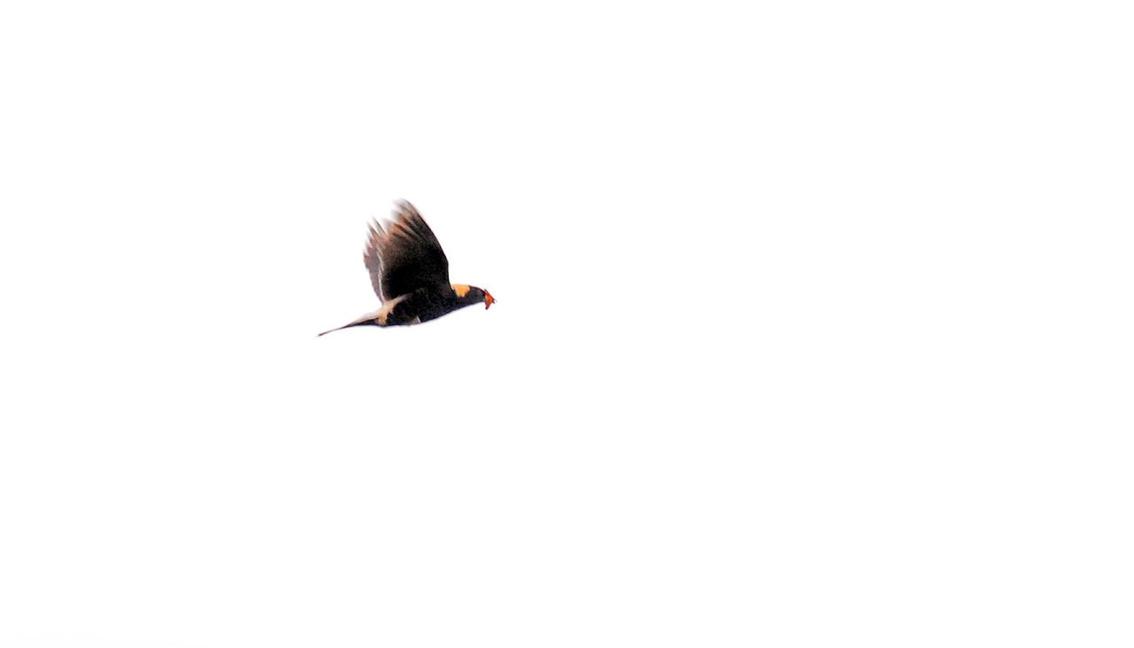birding-festival-2012-057