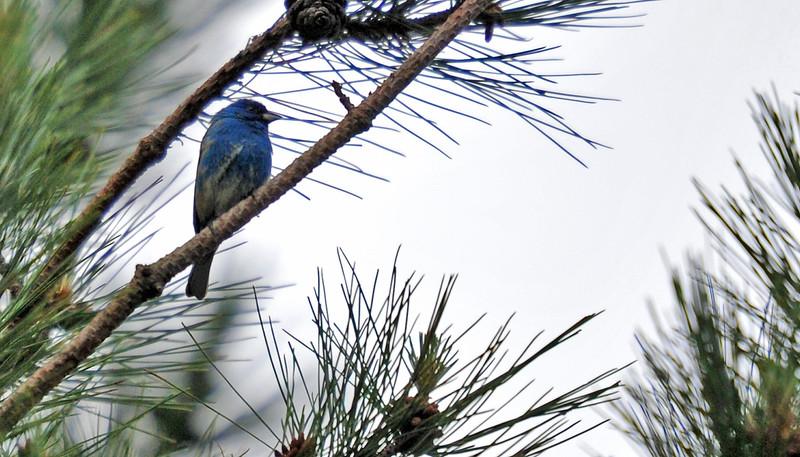 birding-festival-2012-061