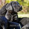 Puppies-006