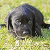 Puppies-010