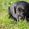 Puppies-009
