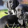 Puppies-005
