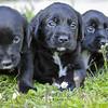 Puppies-012