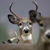 Copy of wildlife (1)