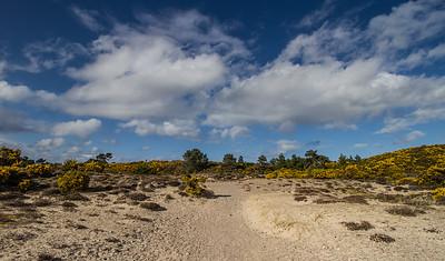 Nature around Findhorn