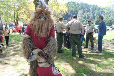Chewbacca was spotted at the Finding Bigfoot Festival in Willow Creek.  (Natalya Estrada-The Times-Standard)