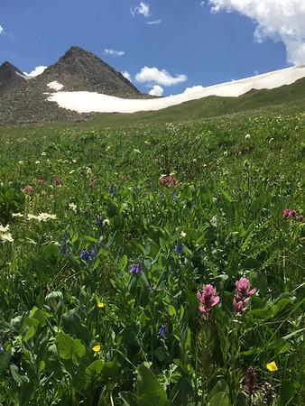 Mayflower Gulch wildflowers