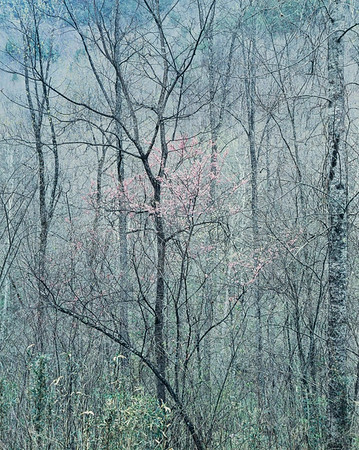 Eliot Porter, Redbud Trees in Bottomland