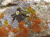 So many colors of lichen in one frame.