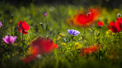 Spring Wildflowers in the Ela Valley