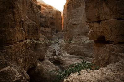 Judean Desert Lower Nachal Og 157v1