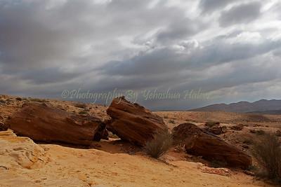 Negev Desert Arenite Rocks - 218-2