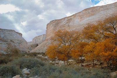 Ein Avdat National Park 163