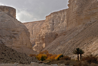 Ein Avdat National Park 157