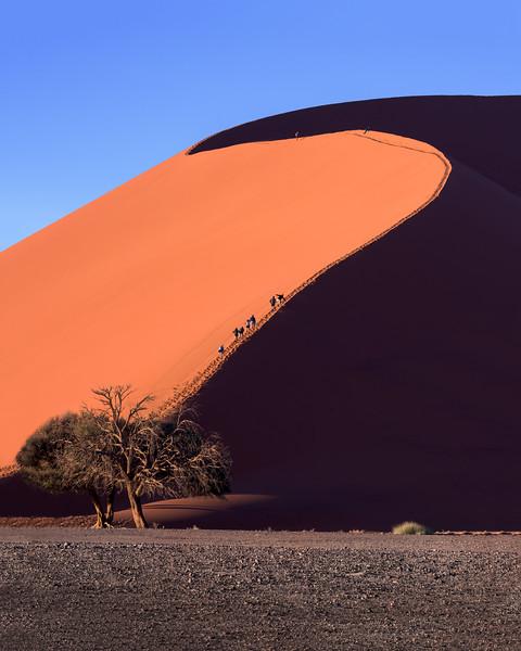 Dune 45 of Sossusvlei in the Morning, Namib-Naukluft Park, Namibia
