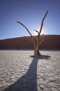 Dead Acacia Trees of Deadvlei in Namib-Naukluft Park, Namibia