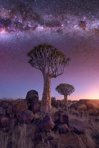 Quiver Forest under the Starry Sky, Keetmanshoop, Namibia