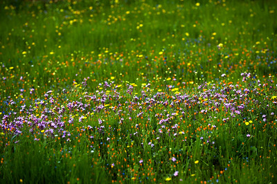 A multitude of spring wildflowers in the Judean Mountains