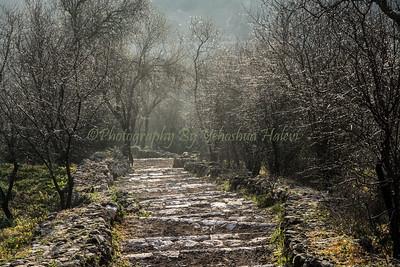 Sataf Almond Trees-6774