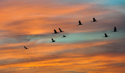 Cranes take to the skies at sunrise above the Hula Valley