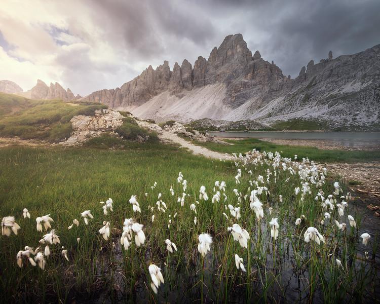 The Marsh of New Hope