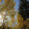 Aspens at Guanella Pass Colorado, 9/29/2013