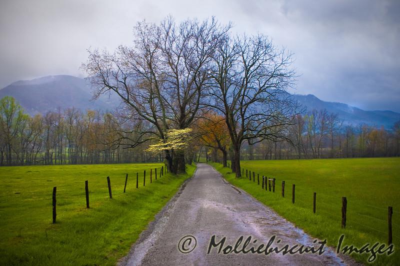 Dogwood Morning and Sparks Lane on a rainy spring morning.