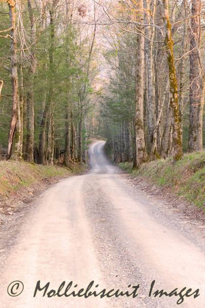 Primitive Baptist Road