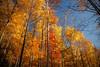 Tree Palettes