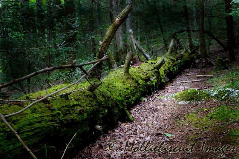 A dark trail beckons....