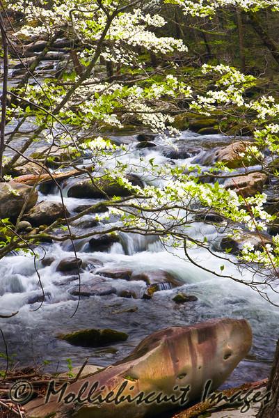 Dogwood over Tremont Stream